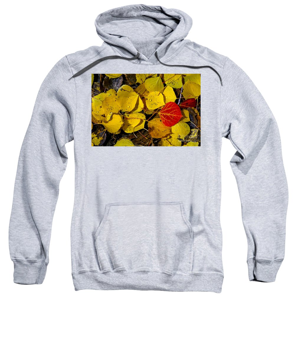 San Juan Mountains Colorado Autumn Leaves Fall Foliage Red Aspen Leaf Yellow Rain Drops Drop Still Life Sweatshirt featuring the photograph Red On Yellow by Bob Phillips