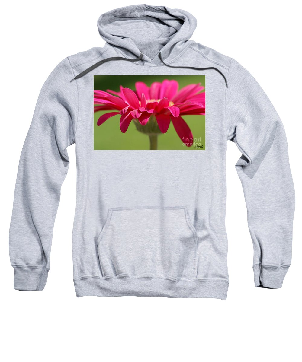 Pink Sweatshirt featuring the photograph Red Pink Daisy by Carol Lynch
