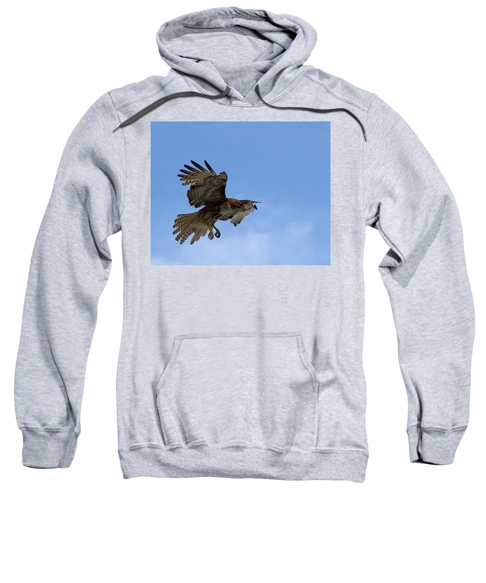 Hawk Sweatshirt featuring the photograph Red Tail Hawk by Bill Gallagher