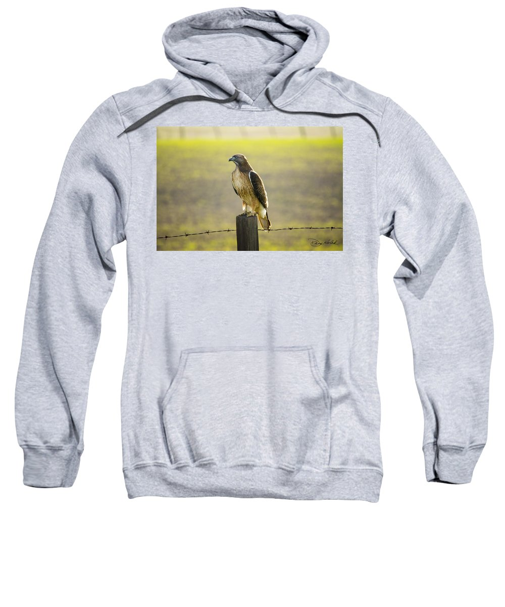 Red Tailed Hawk Sweatshirt featuring the photograph Red Tailed Hawk by Doug Holck