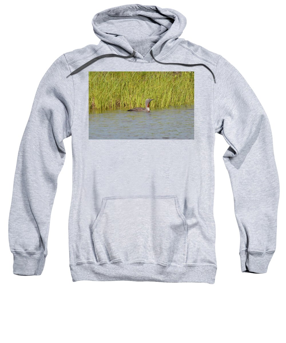 Red-throated Loon Sweatshirt featuring the photograph Red-throated Loon by James Petersen