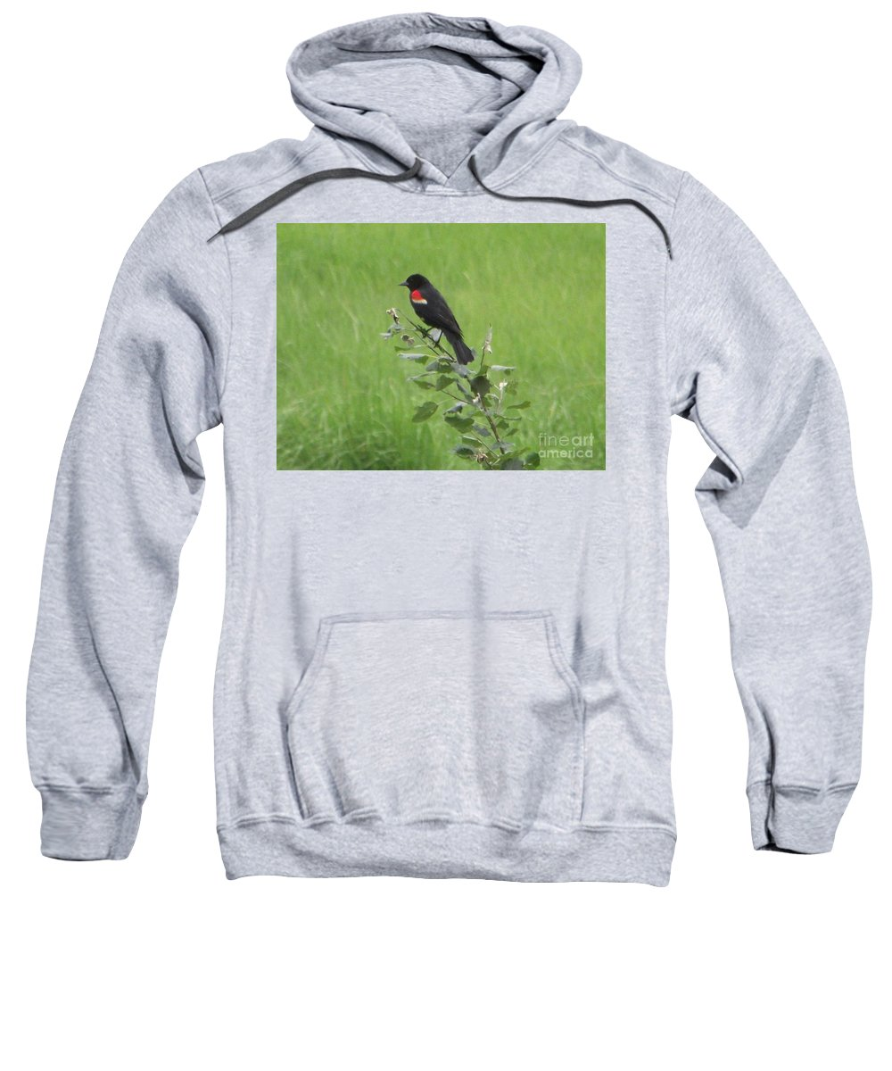 Red Wing Blackbird Sweatshirt featuring the photograph Red Wing Blackbird by Michelle Welles
