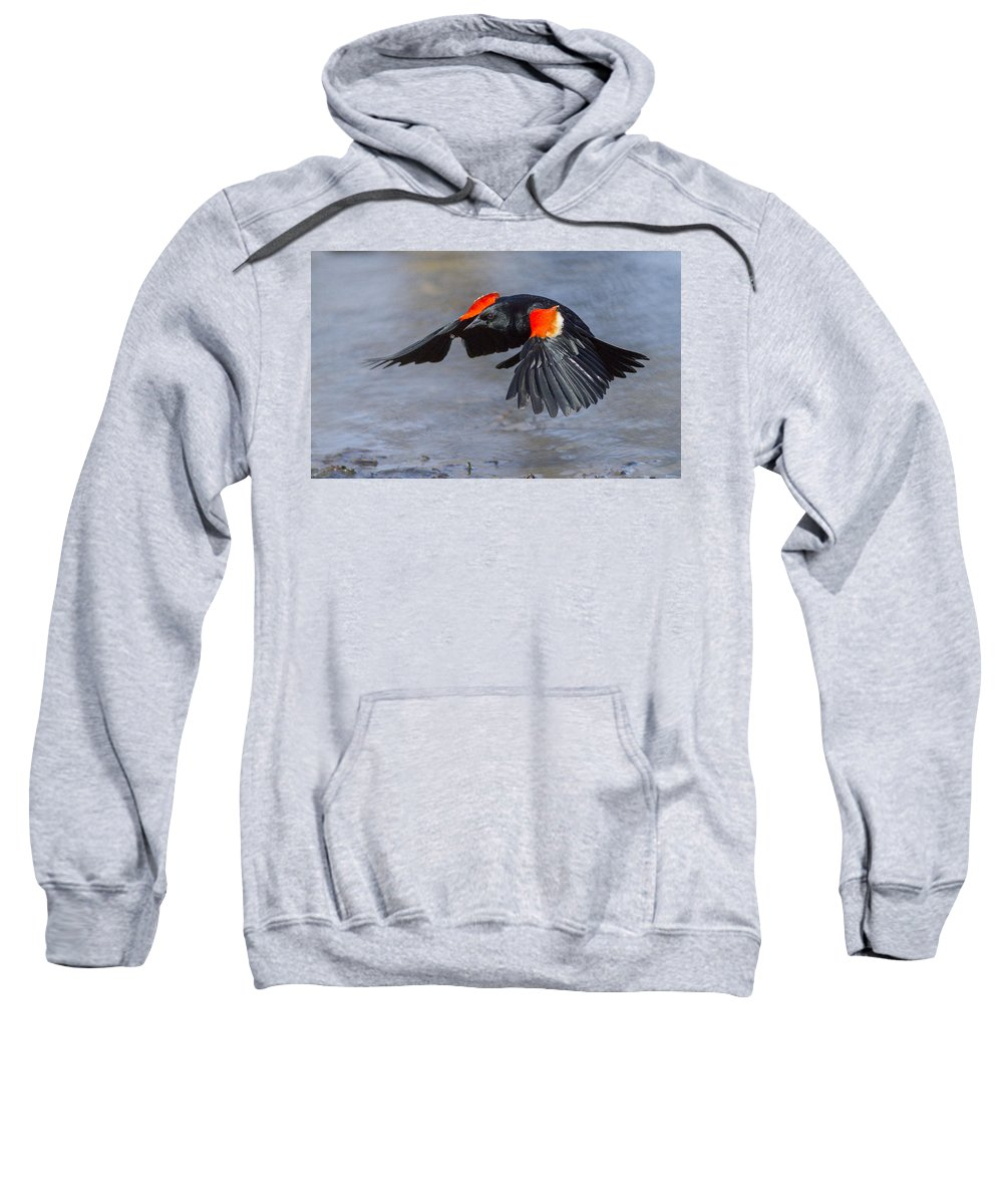 Animal Sweatshirt featuring the photograph Red Winged Blackbird by Mircea Costina Photography