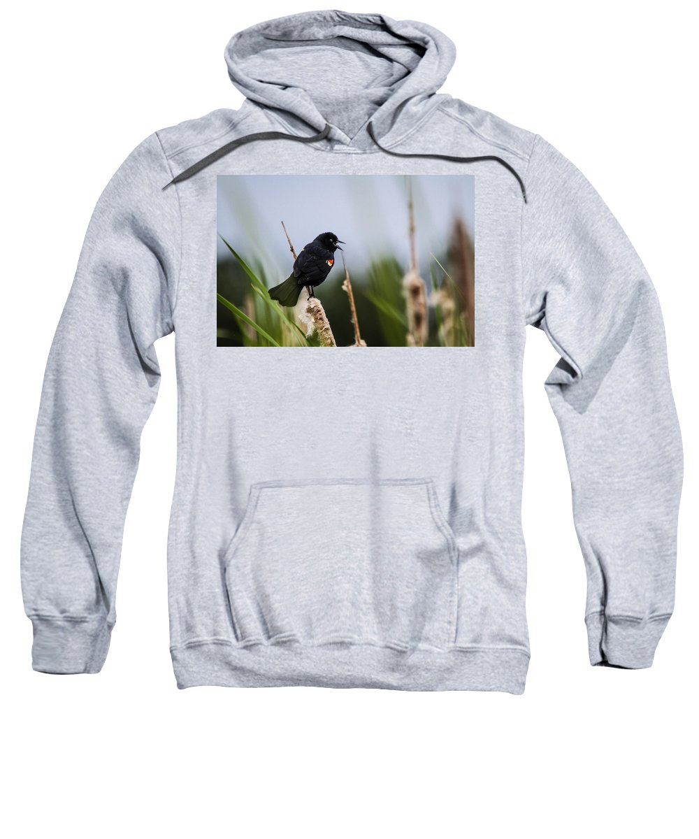 Cattails Sweatshirt featuring the photograph Red Winged Blackbird Singing by Eti Reid