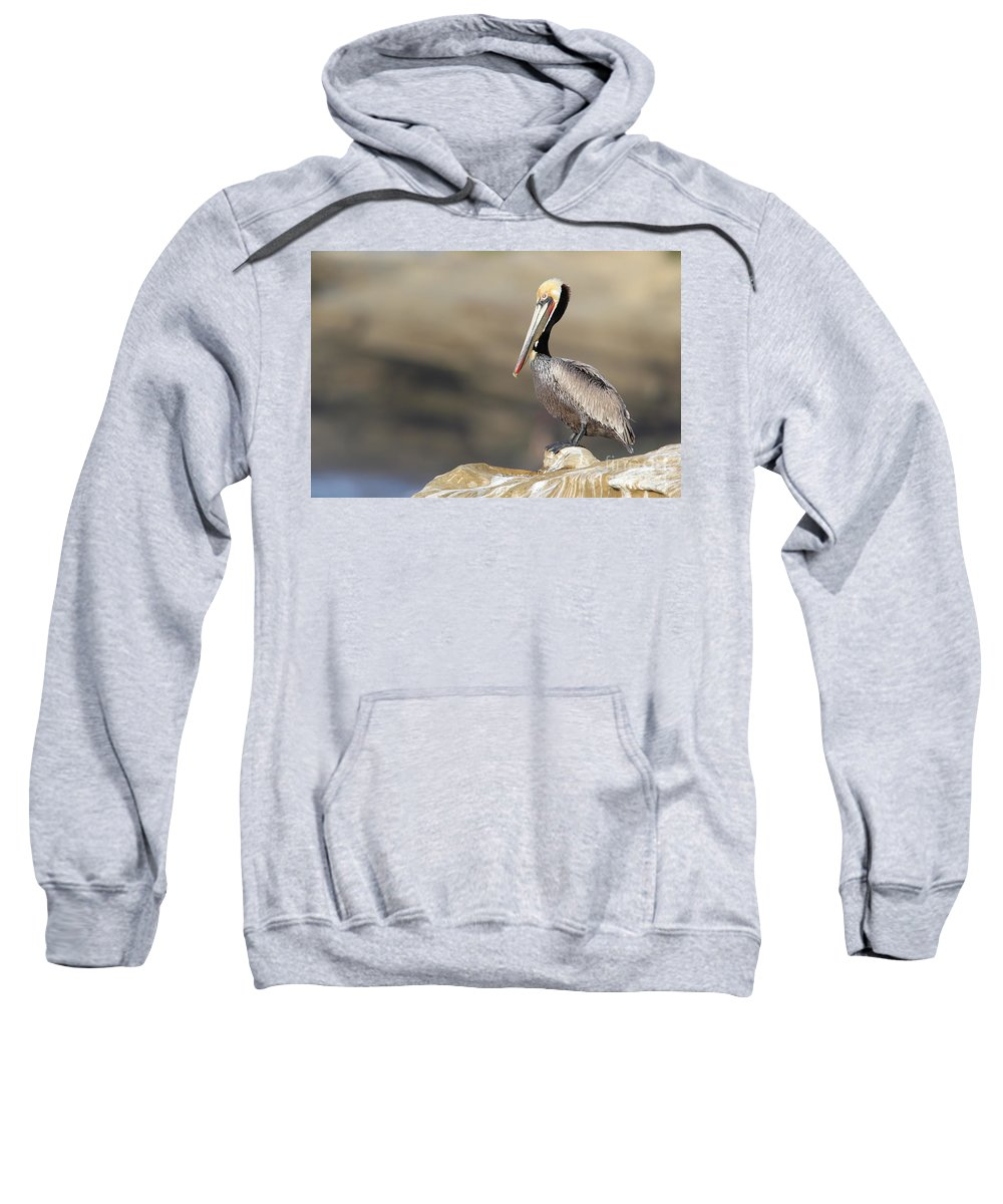 Pelican Sweatshirt featuring the photograph Resting Pelican by Bryan Keil