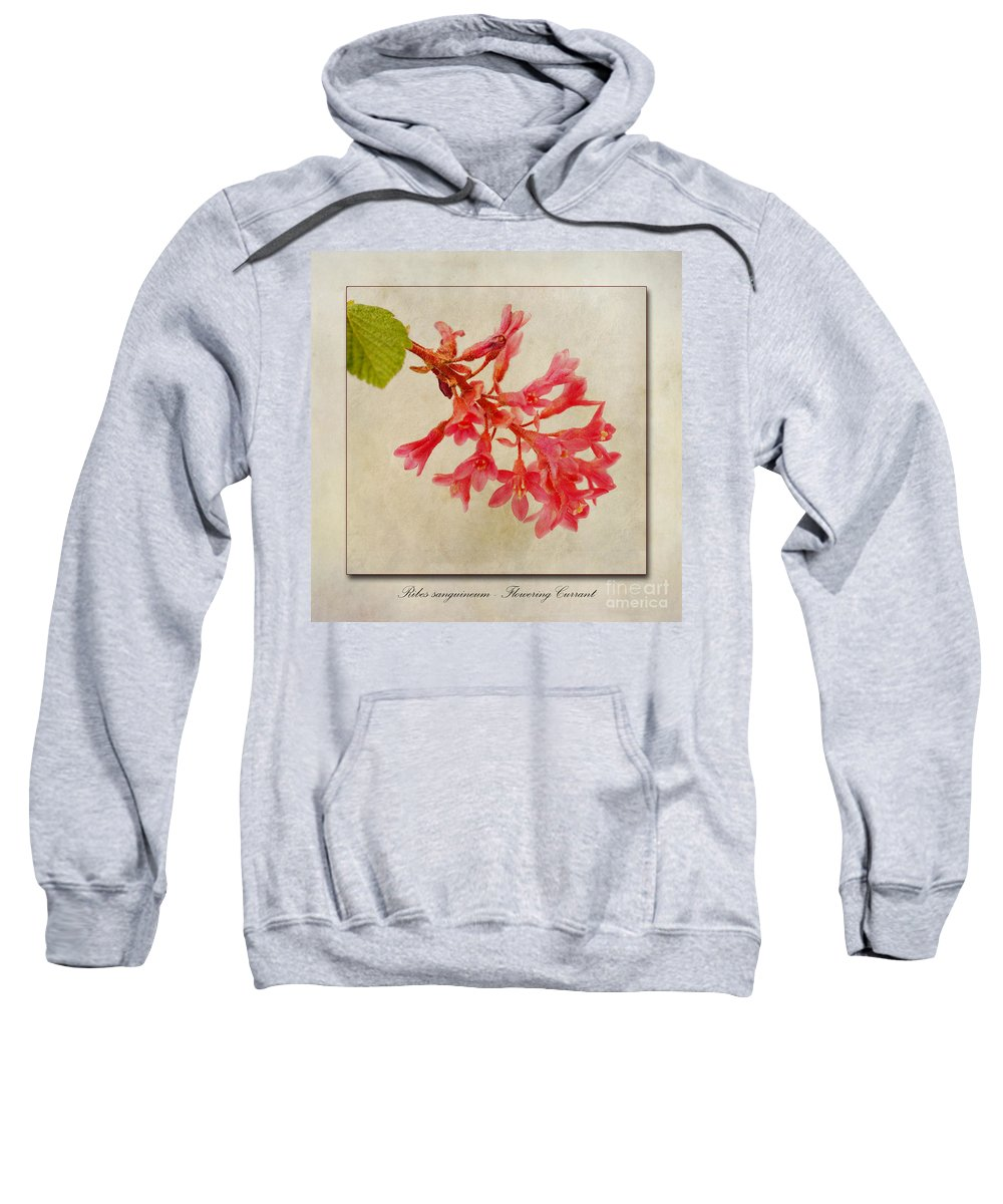Red Flowering Currant Sweatshirt featuring the photograph Ribes Sanguineum Flowering Currant by John Edwards