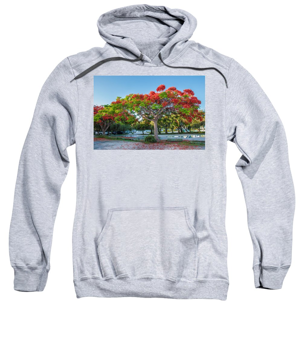 Royal Poinciana Sweatshirt featuring the photograph Royal Poinciana by Amel Dizdarevic