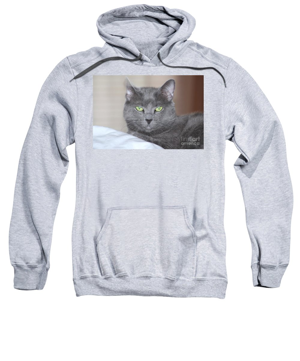 Cat Sweatshirt featuring the photograph Russian Blue by Michelle Powell