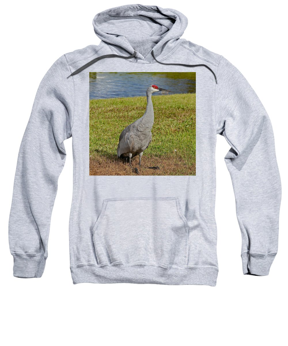 Birds Sweatshirt featuring the photograph Sandhill Crane by Denise Mazzocco