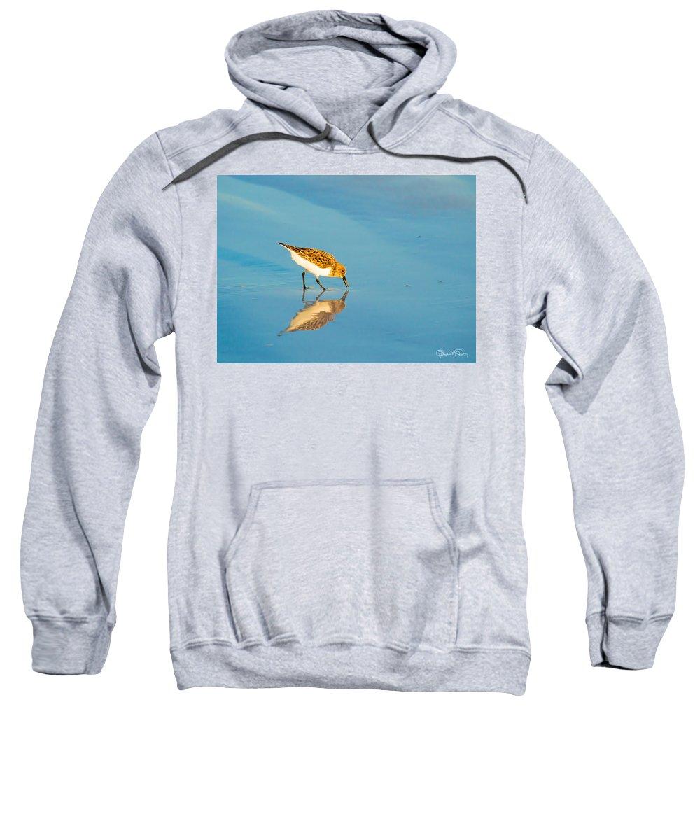 susan Molnar Sweatshirt featuring the photograph Sandpiper Mirror by Susan Molnar