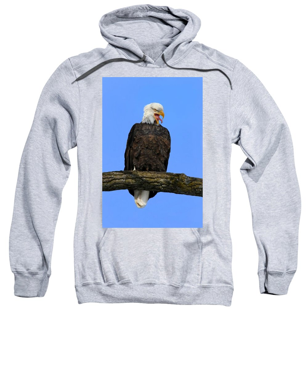Bird Sweatshirt featuring the photograph Say Aah by John Absher