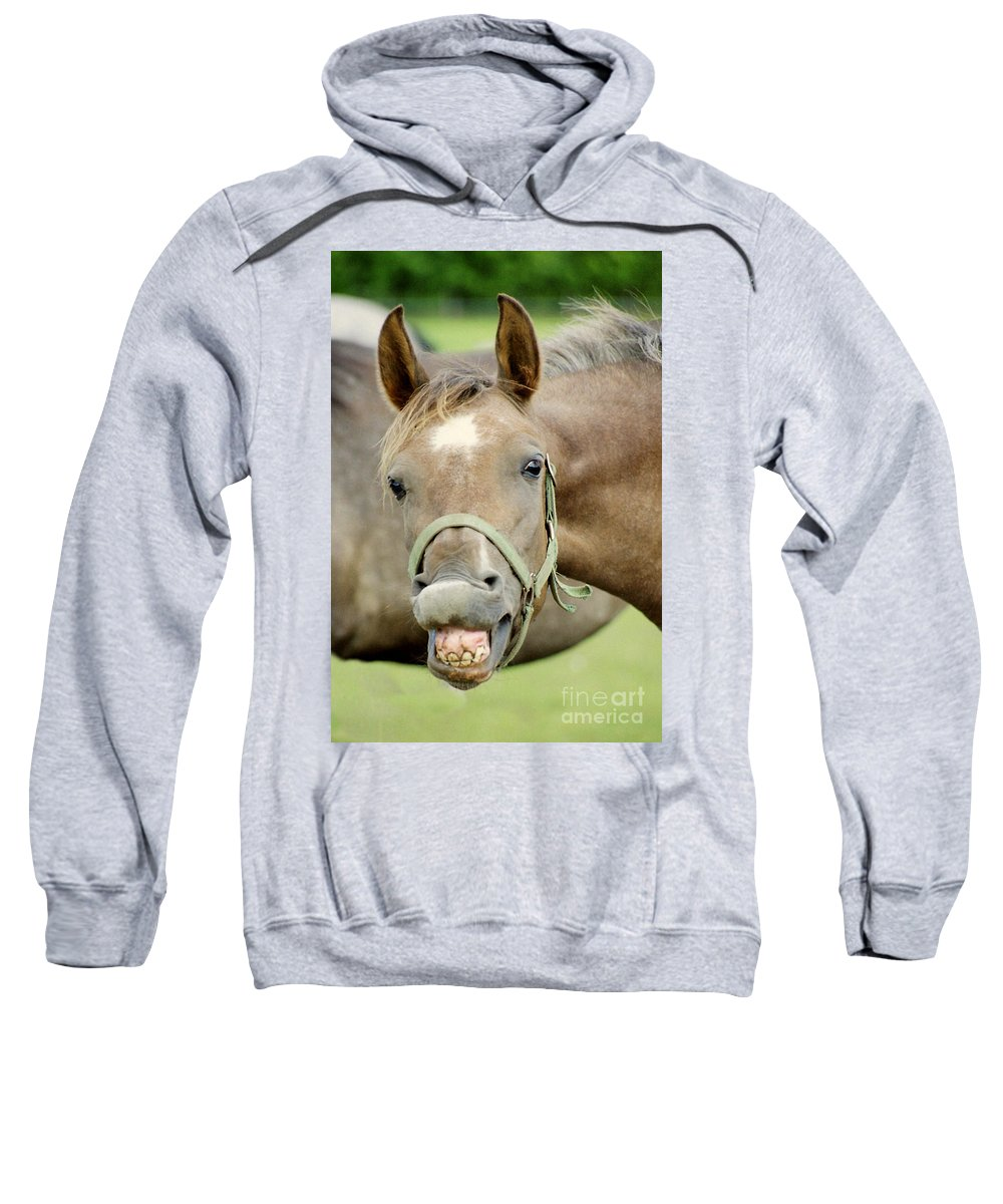 Horse Sweatshirt featuring the photograph Say Cheese by Angel Ciesniarska