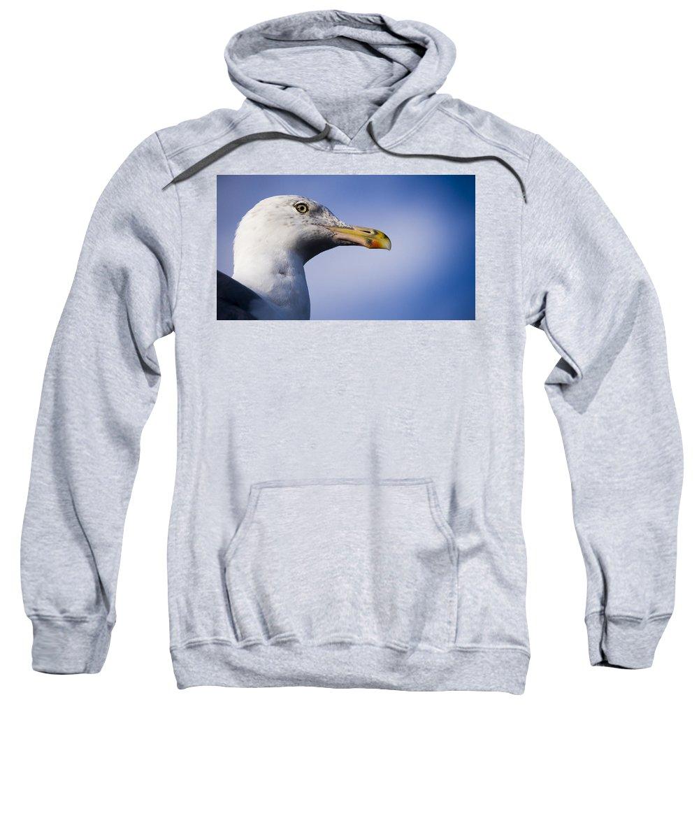 Bird Sweatshirt featuring the photograph Seagull - Cape Neddick - Maine by Steven Ralser