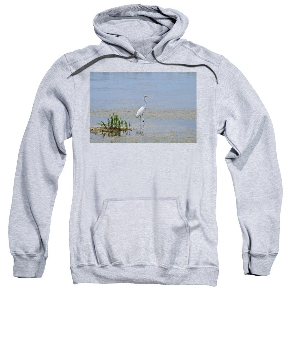 Wildlife Sweatshirt featuring the photograph Serene by Judith Morris