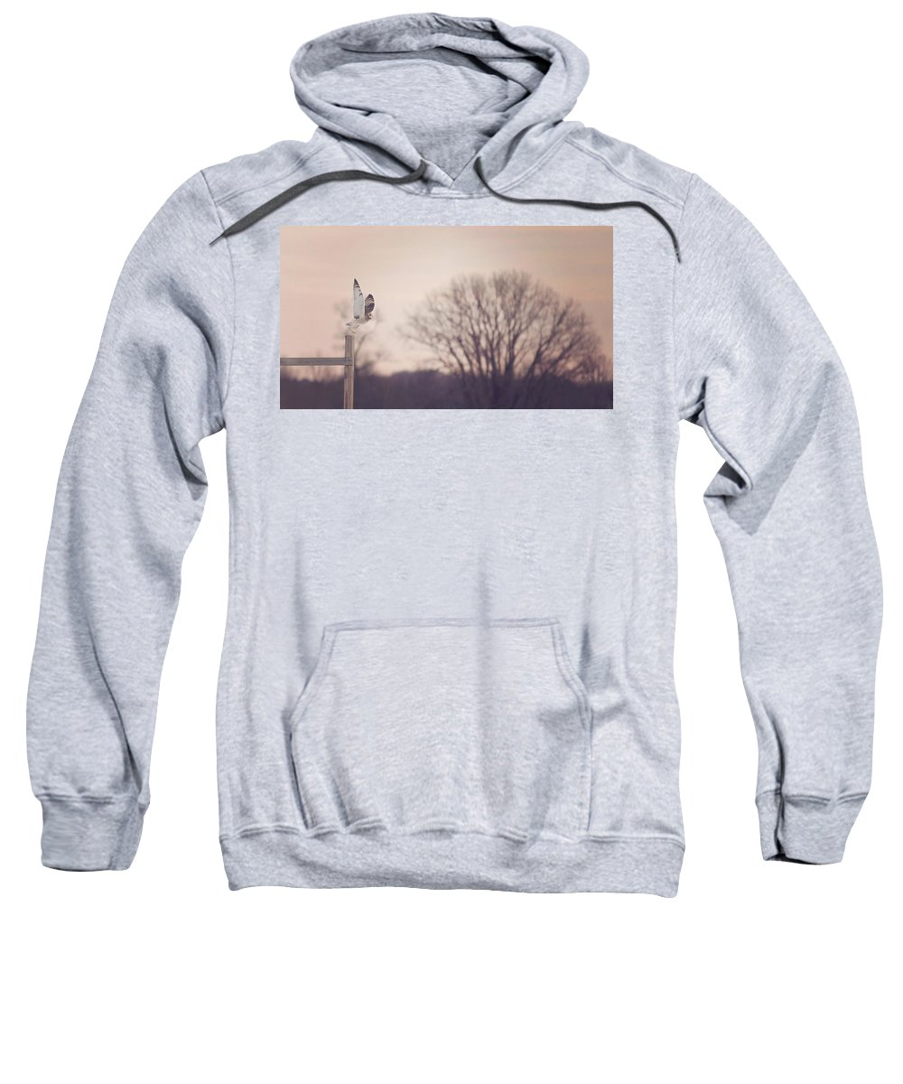 Winter Sweatshirt featuring the photograph Short Eared Owl At Dusk by Carrie Ann Grippo-Pike