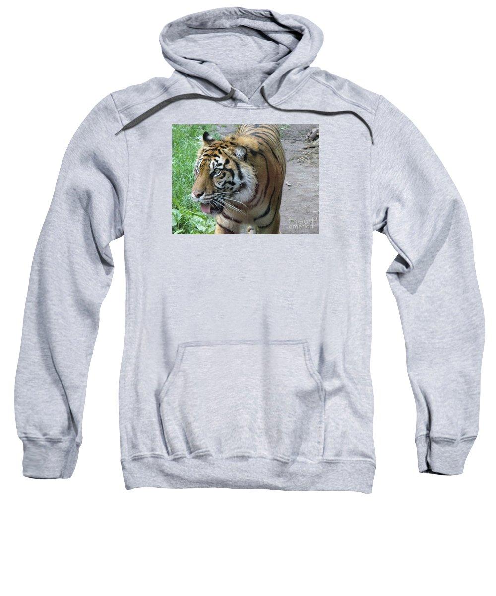 Animal Sweatshirt featuring the photograph Siberian Tiger by Lingfai Leung