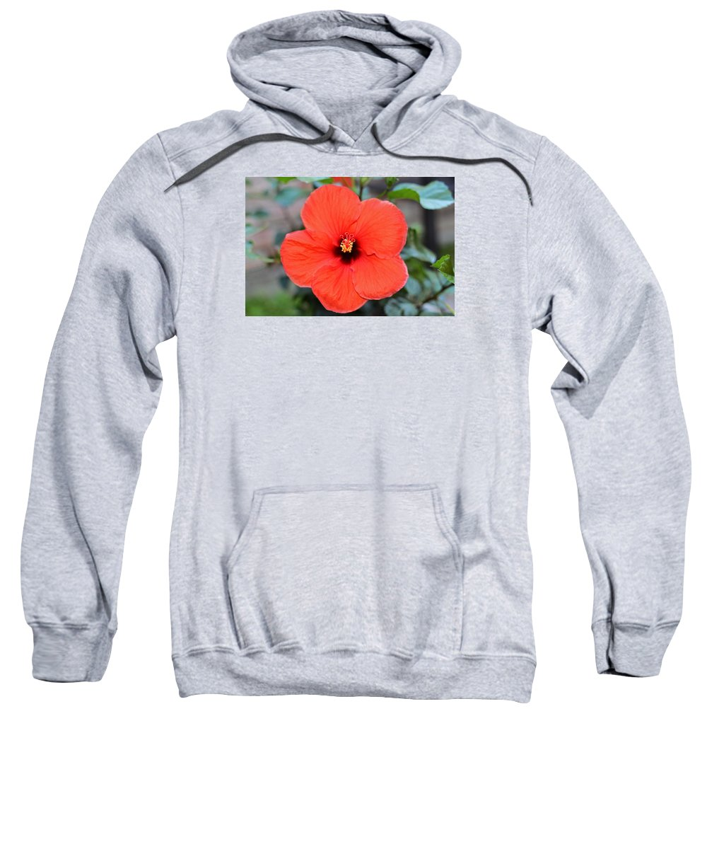 Red Hibiscus Sweatshirt featuring the photograph Silky Red Hibiscus Flower by Connie Fox