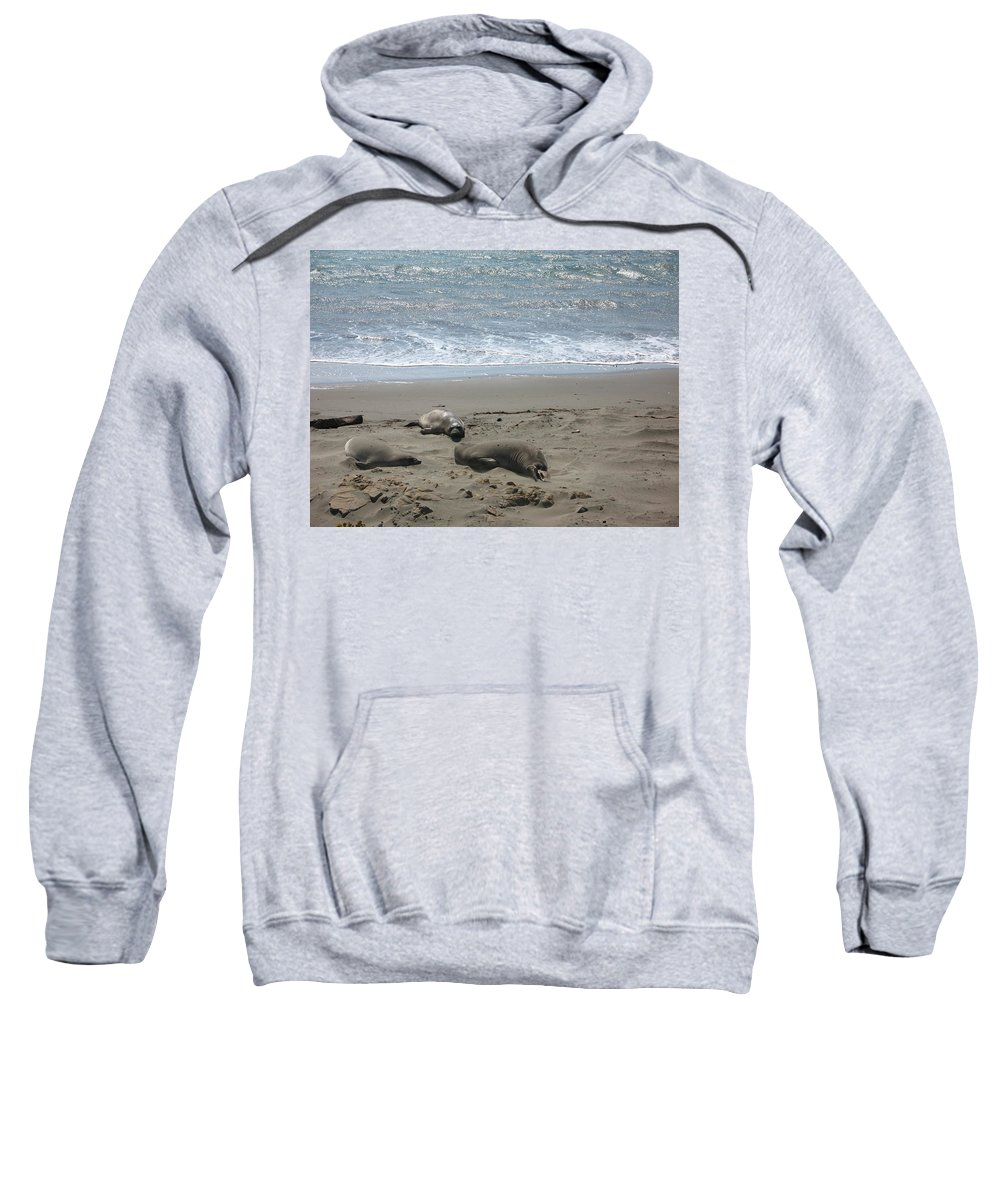Seals Sweatshirt featuring the photograph Sleeping On The Beach by Christiane Schulze Art And Photography