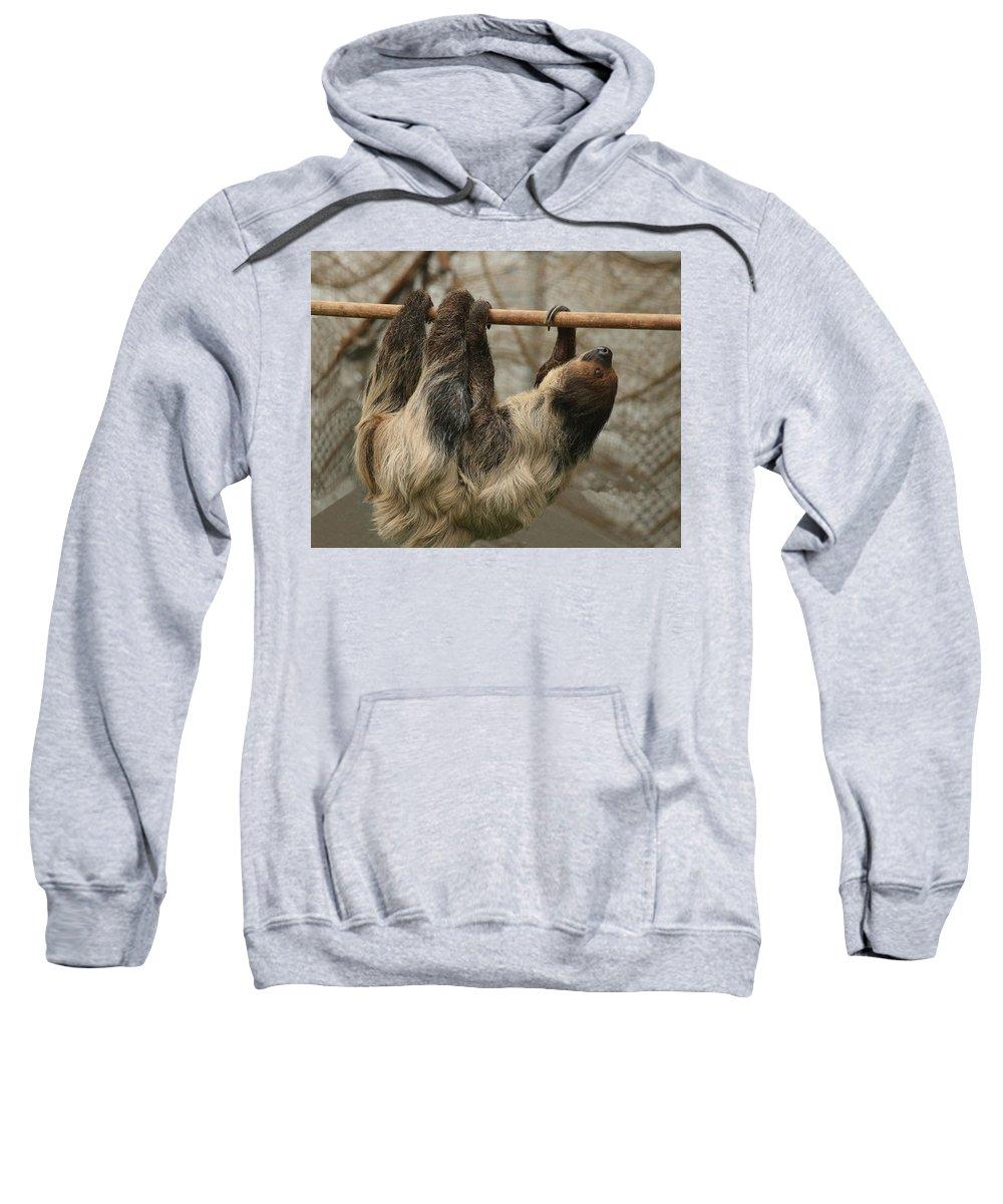 Sloth Sweatshirt featuring the photograph Sloth by Ellen Henneke