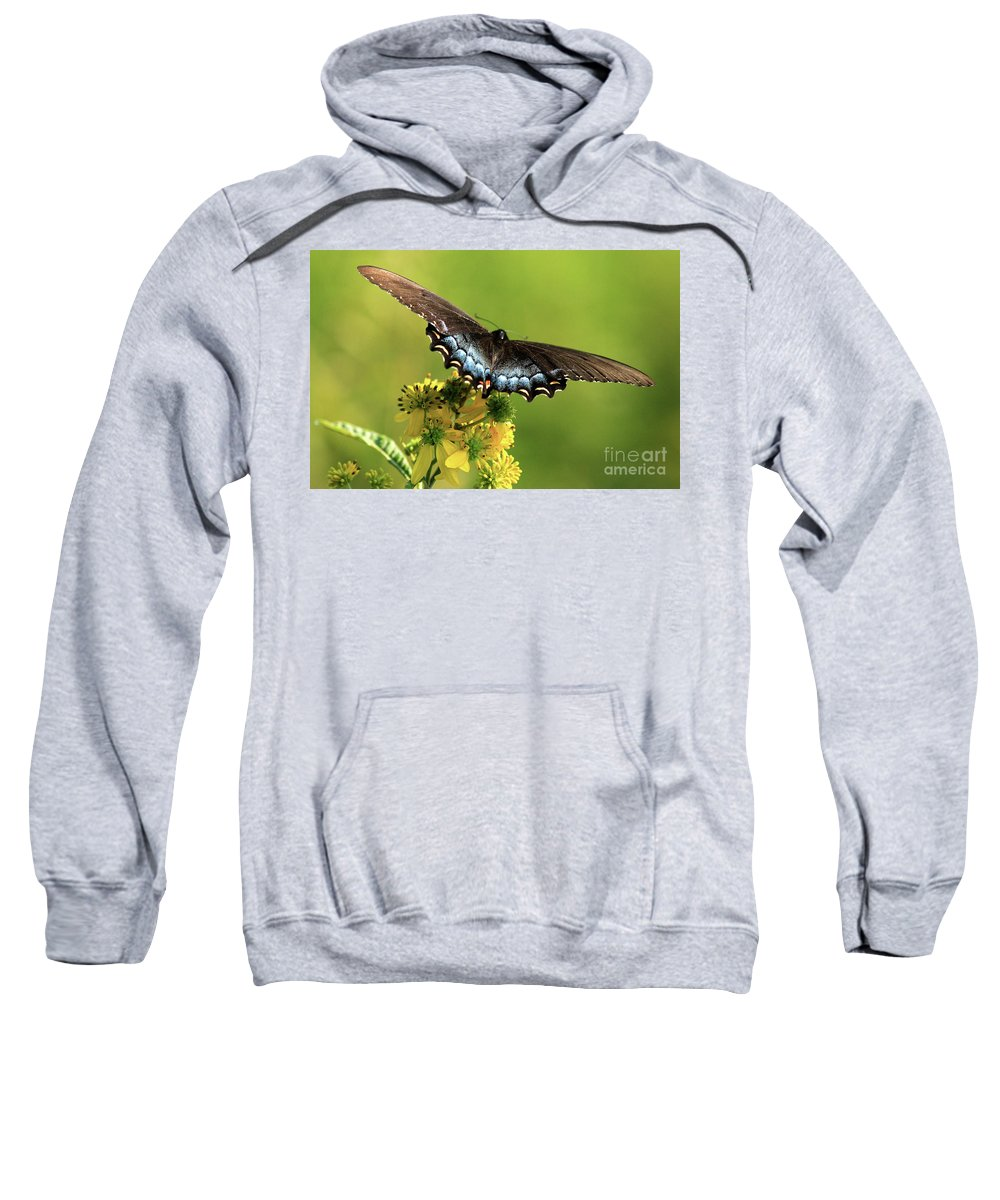 Sweatshirt featuring the photograph Smoky Mountain Color by Douglas Stucky