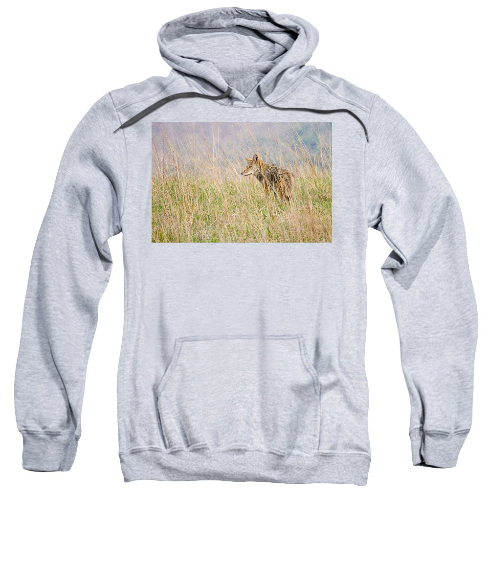 Coyote Sweatshirt featuring the photograph Smoky Mountains Coyote by Bill Swindaman