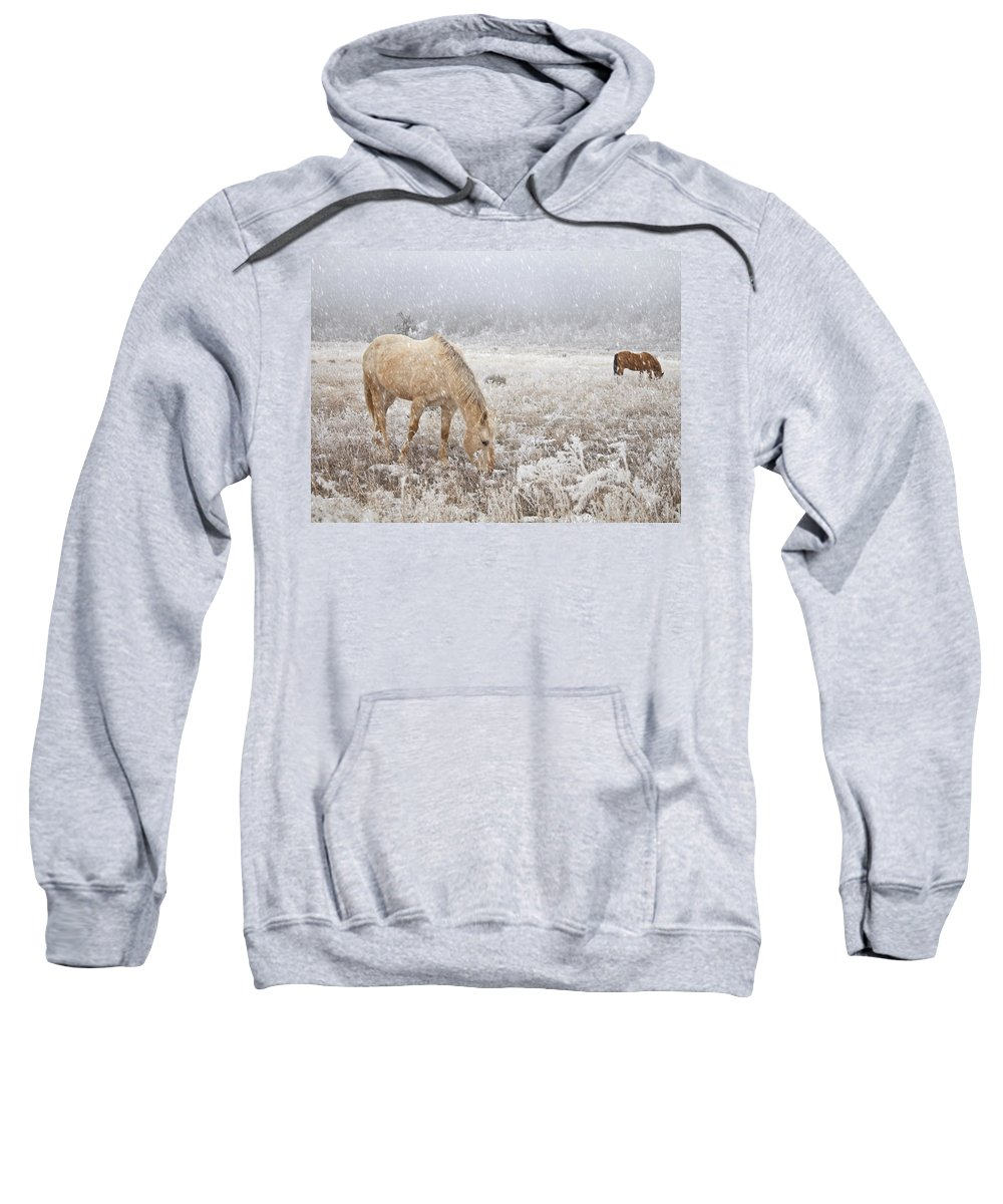 Horse Sweatshirt featuring the photograph Snow Falling On Horses by Theresa Tahara
