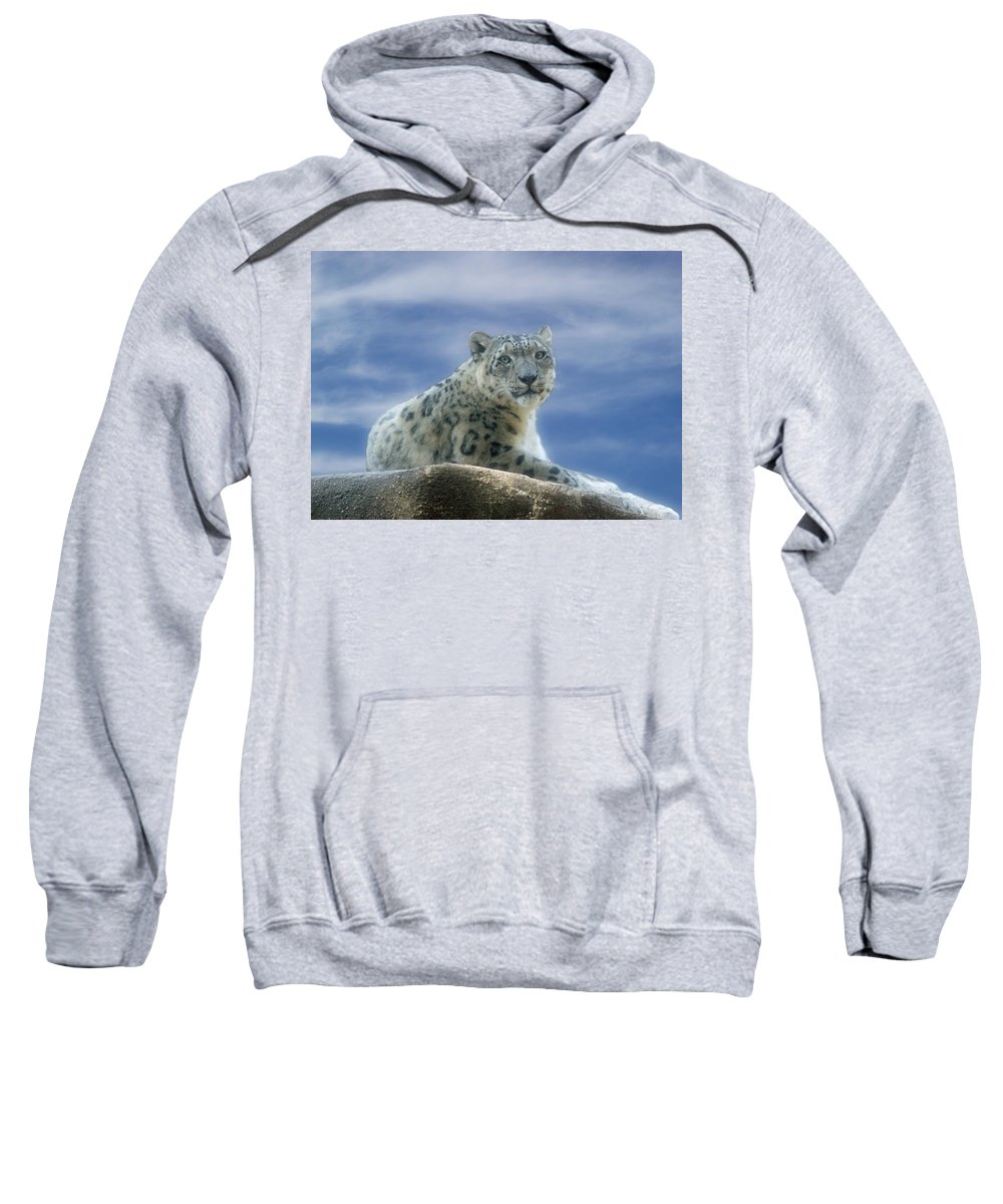 Snow Leopard Sweatshirt featuring the photograph Snow Leopard by Sandy Keeton