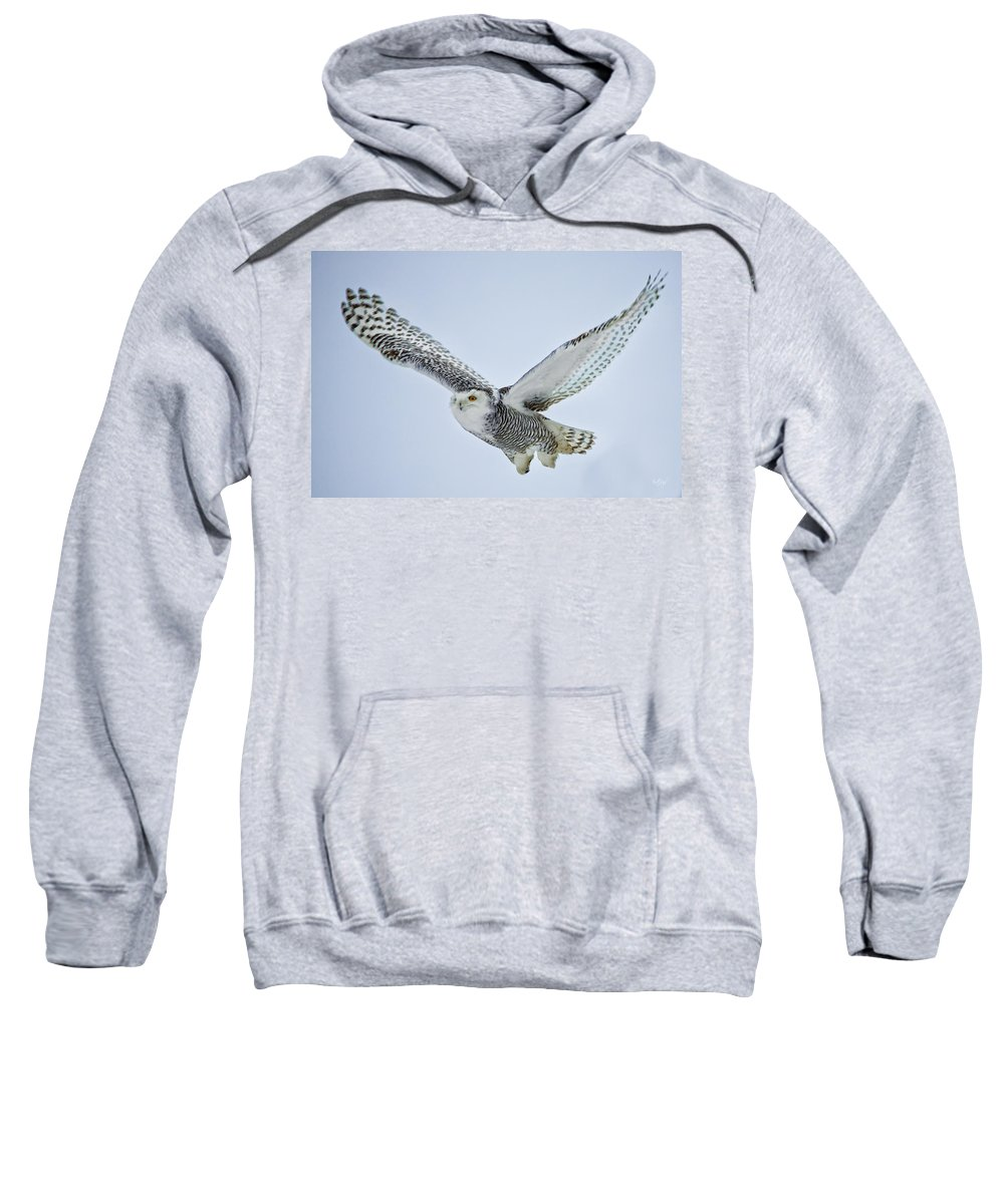 Snowy Owl Sweatshirt featuring the photograph Snowy Owl In Flight by Everet Regal