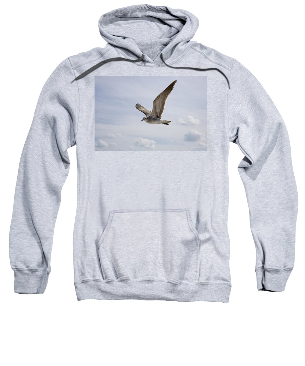 Seagull Sweatshirt featuring the photograph Soaring Gull by Daniel Murphy