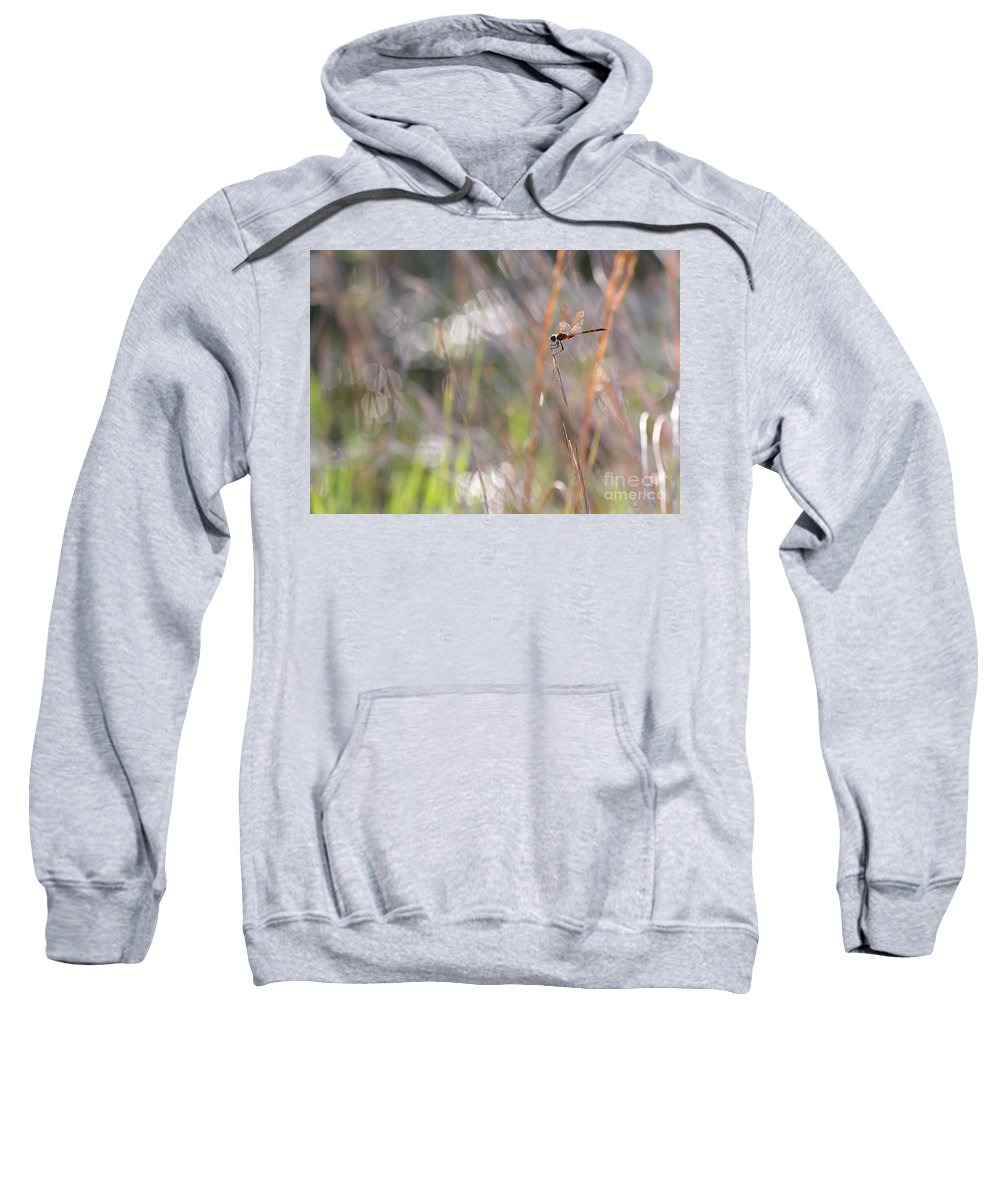 Dragonfly Sweatshirt featuring the photograph Sparkling Morning Sunshine With Dragonfly by Carol Groenen