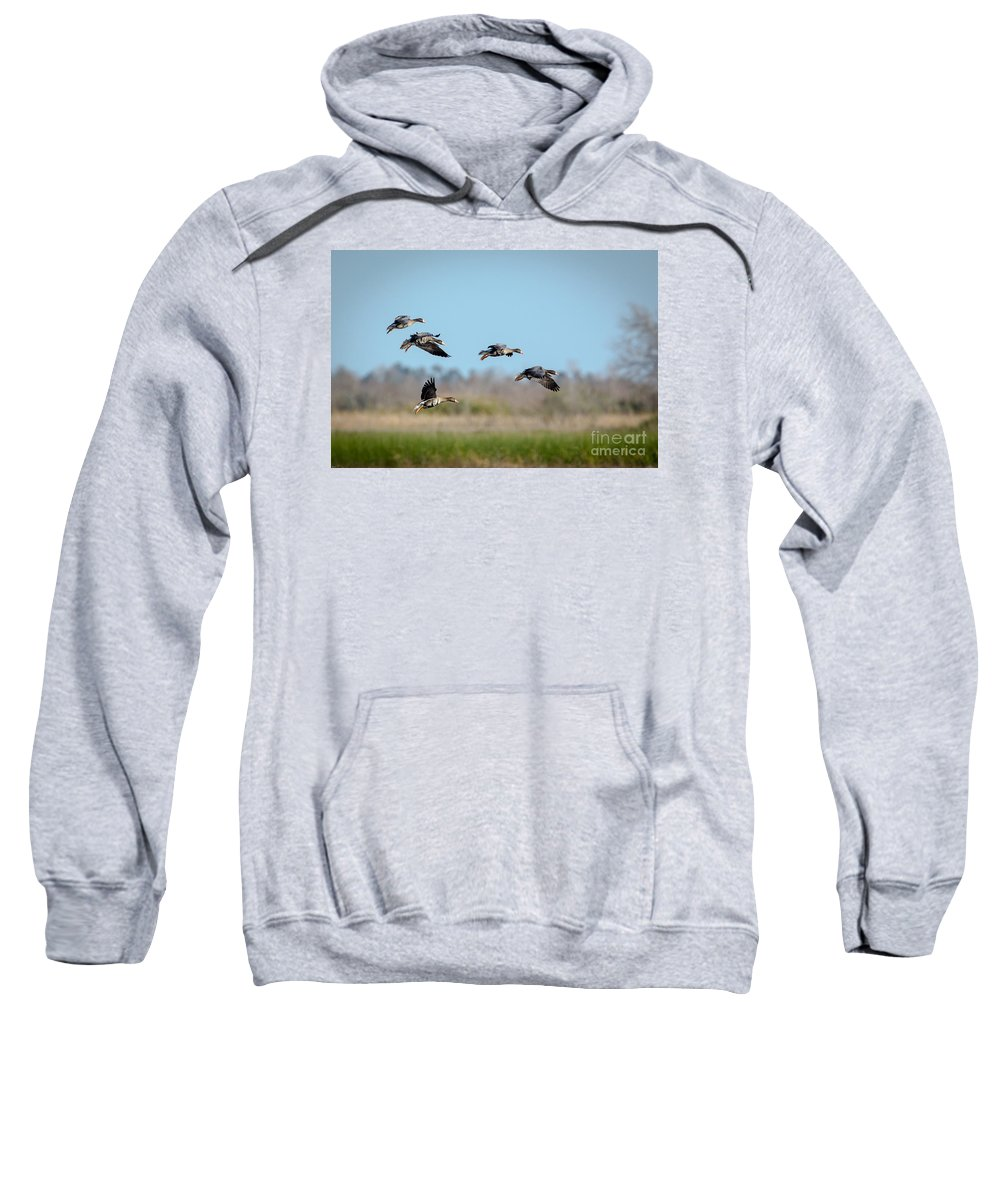 Geese Sweatshirt featuring the photograph Speckled Belly Geese Coming In For A Landing by Kelly Morvant