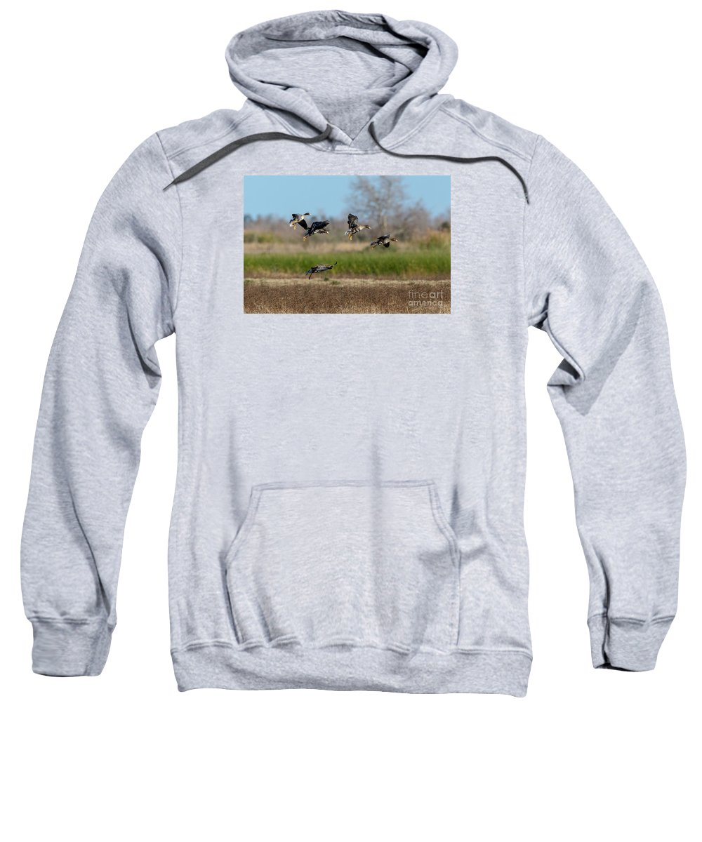 Geese Sweatshirt featuring the photograph Speckled Belly Geese Landing by Kelly Morvant