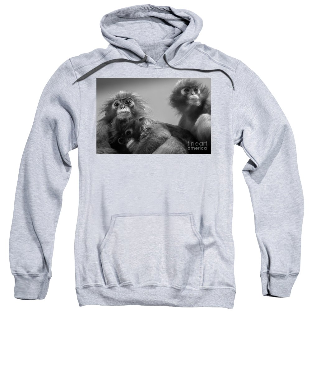 Spectacled Langur Sweatshirt featuring the photograph Spectacled Langur Family by David Rucker