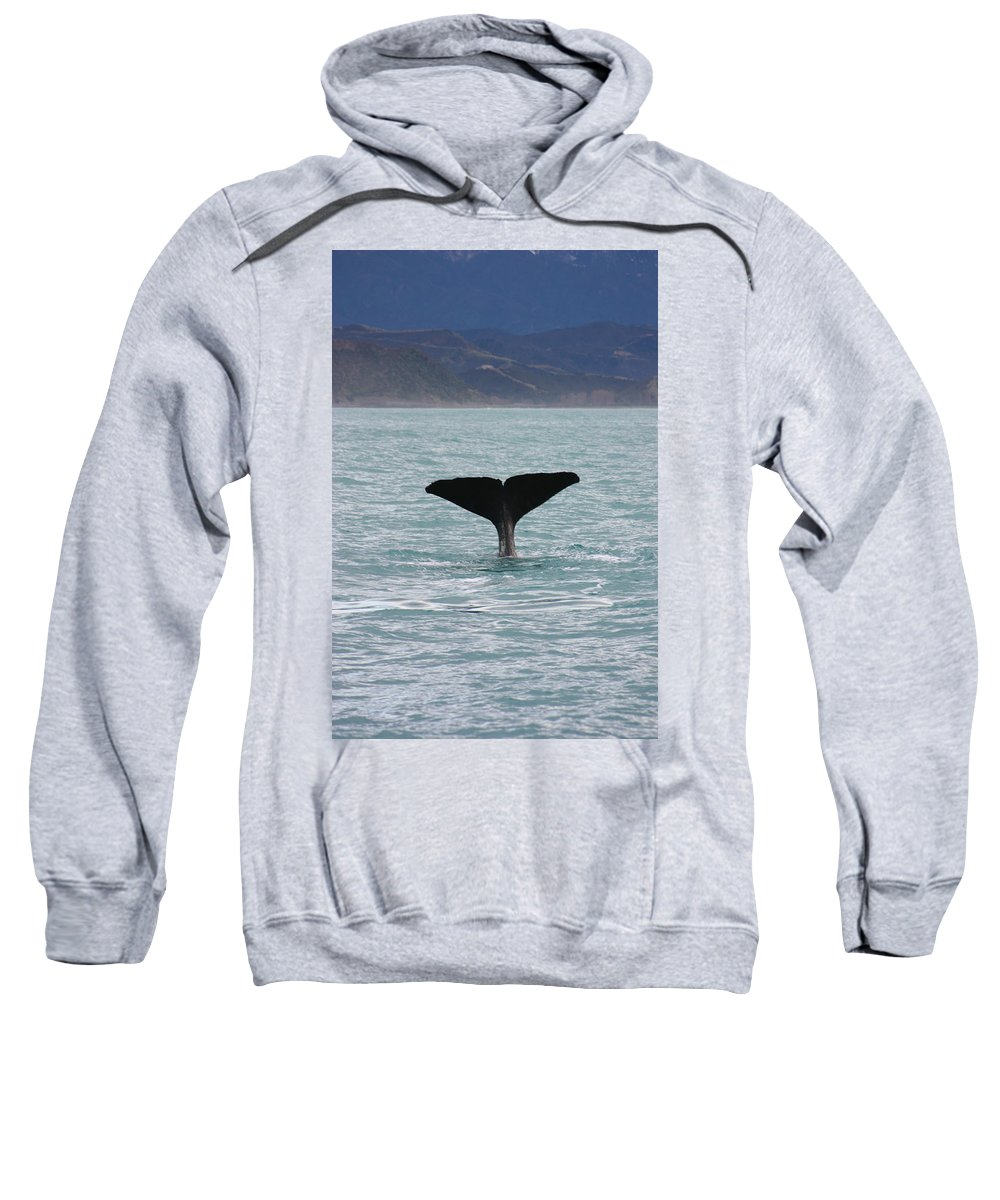 Whale Sweatshirt featuring the photograph Sperm Whale Diving by Amanda Stadther