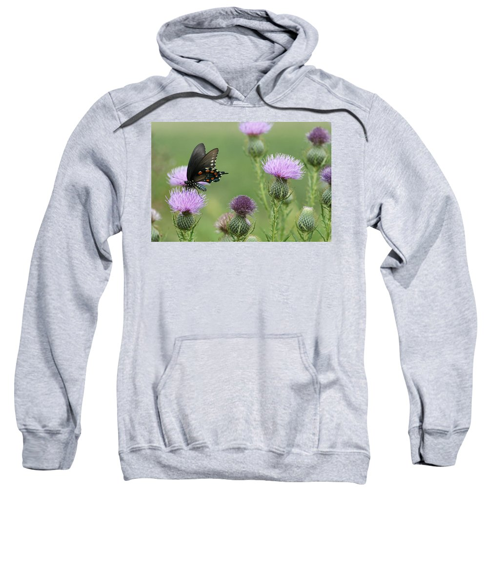 Spicebush Sweatshirt featuring the photograph Spicebush Swallowtail Butterfly On Bull Thistle Wildflowers by Kathy Clark