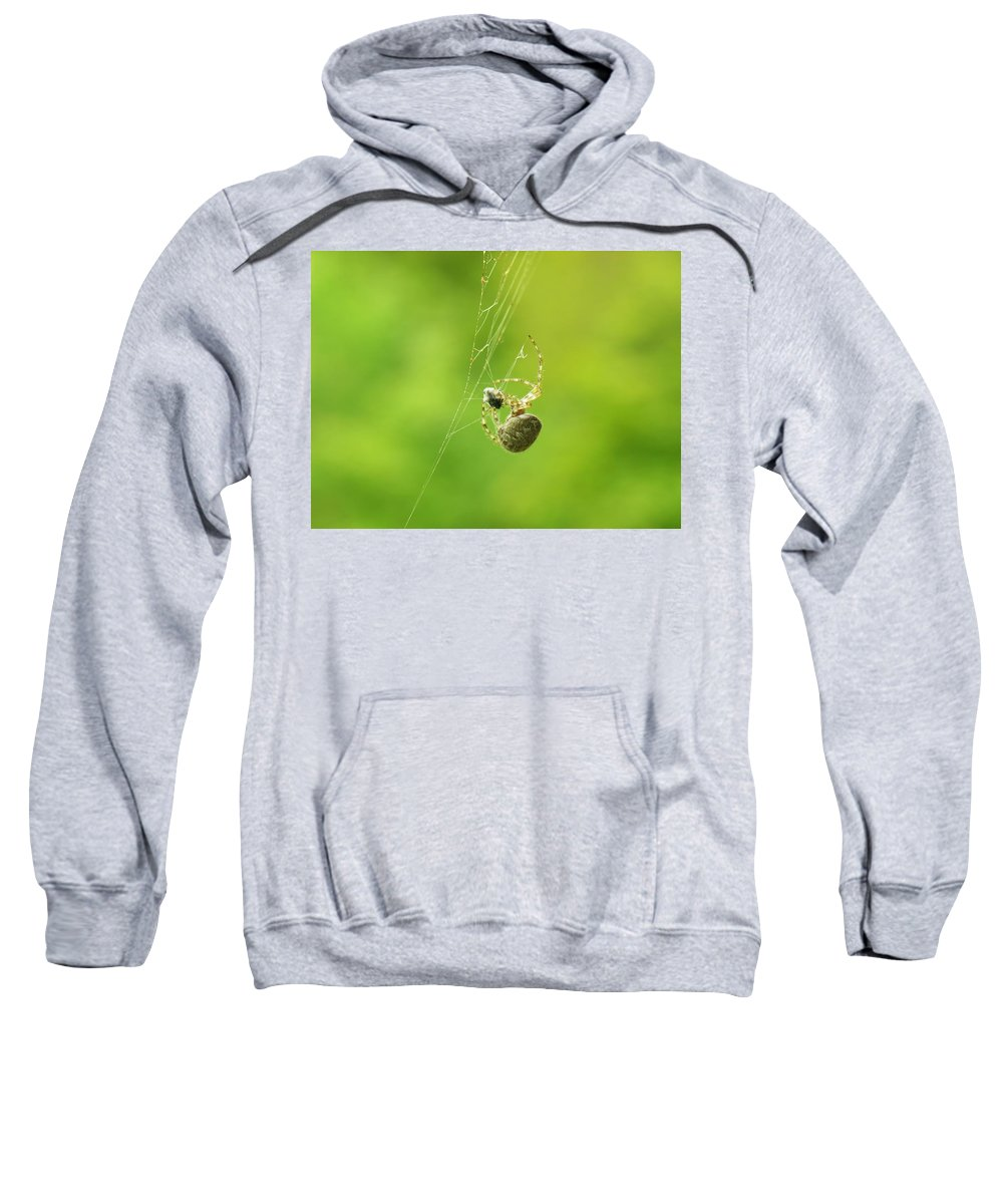 Spider Sweatshirt featuring the photograph Spider Wrapping Its Food by Sherman Perry