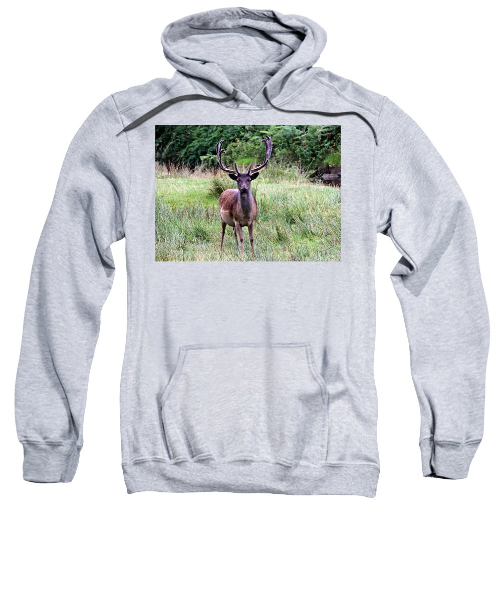 Deer Sweatshirt featuring the photograph Stag by Tom Conway