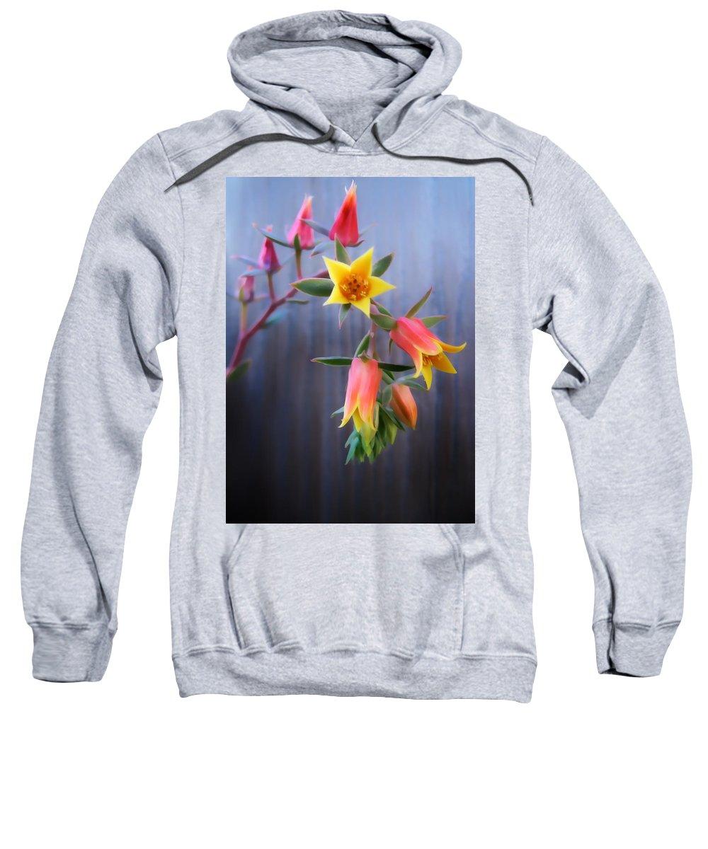 Flower Sweatshirt featuring the photograph Succulent 23 by Dawn Eshelman