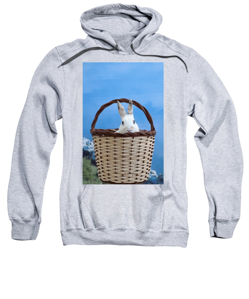 White Sweatshirt featuring the photograph sugar the easter bunny 4 - A curious and cute white rabbit in a hand basket by Pedro Cardona Llambias