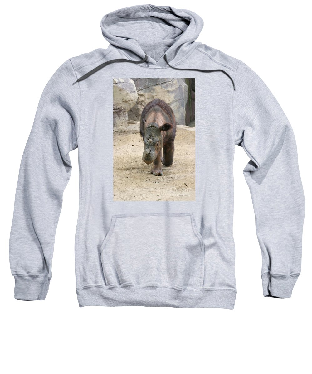 Sumatran Rhinoceros Sweatshirt featuring the photograph Sumatran Rhinoceros by Judy Whitton