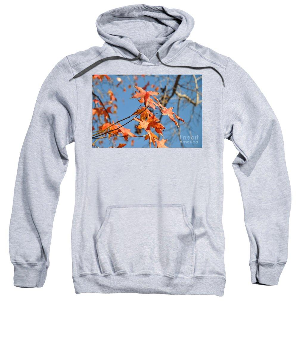 Summer Sweatshirt featuring the photograph Summer Gold Leaf by Gandz Photography