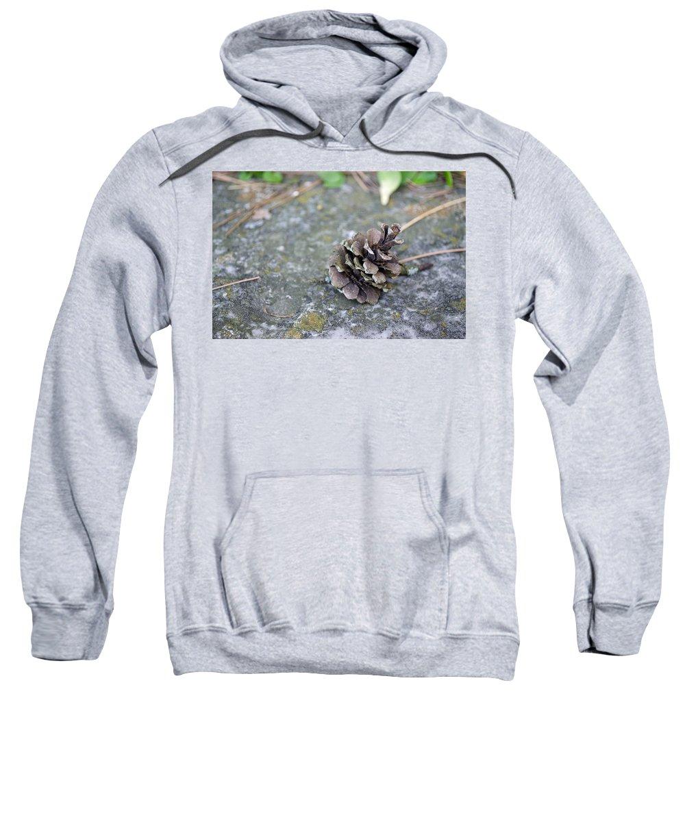 Pinecone Sweatshirt featuring the photograph Summer Pinecone by Jim Shackett