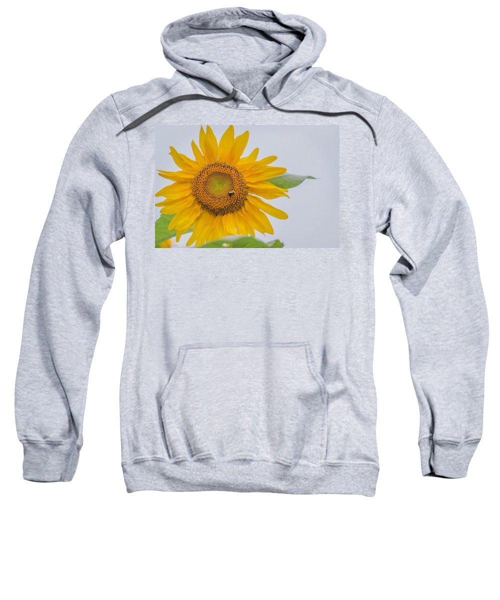 Sunflower Sweatshirt featuring the photograph Sunflower And Bee by Amber Flowers
