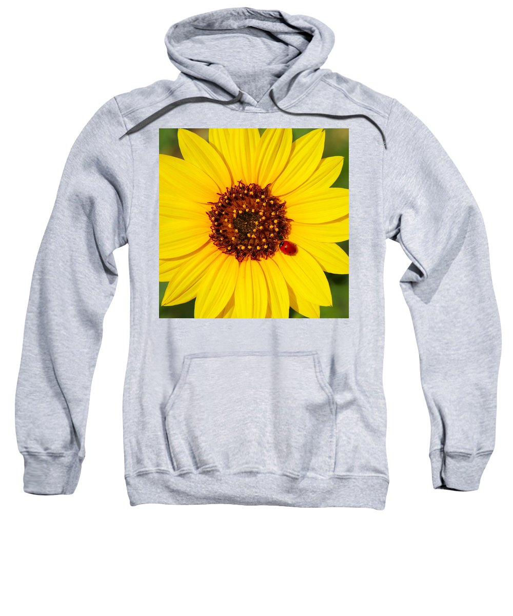 Ladybug Sweatshirt featuring the photograph Sunflower And Ladybird Beetle 2am-110490 by Andrew McInnes