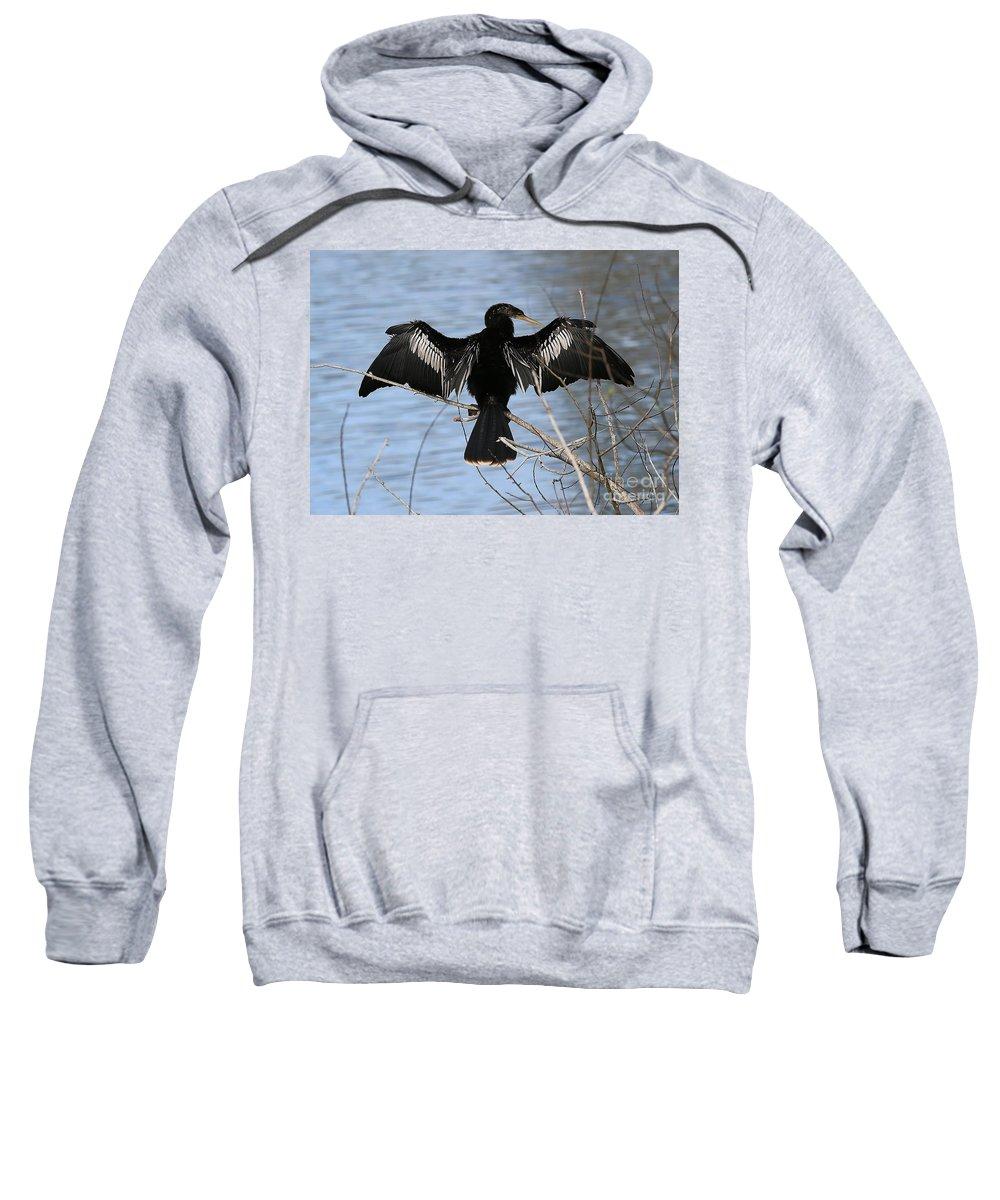 Anhinga Sweatshirt featuring the photograph Sunning Anhinga by Carol Groenen