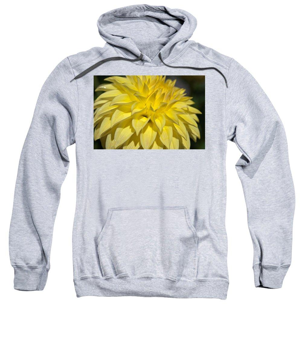 Sunshine Sweatshirt featuring the photograph Sunshine Dahlia by Tikvah's Hope