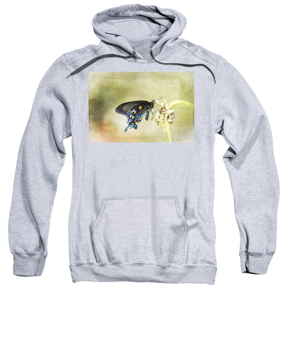 Insect Sweatshirt featuring the photograph Swallowtail by Judy Hall-Folde