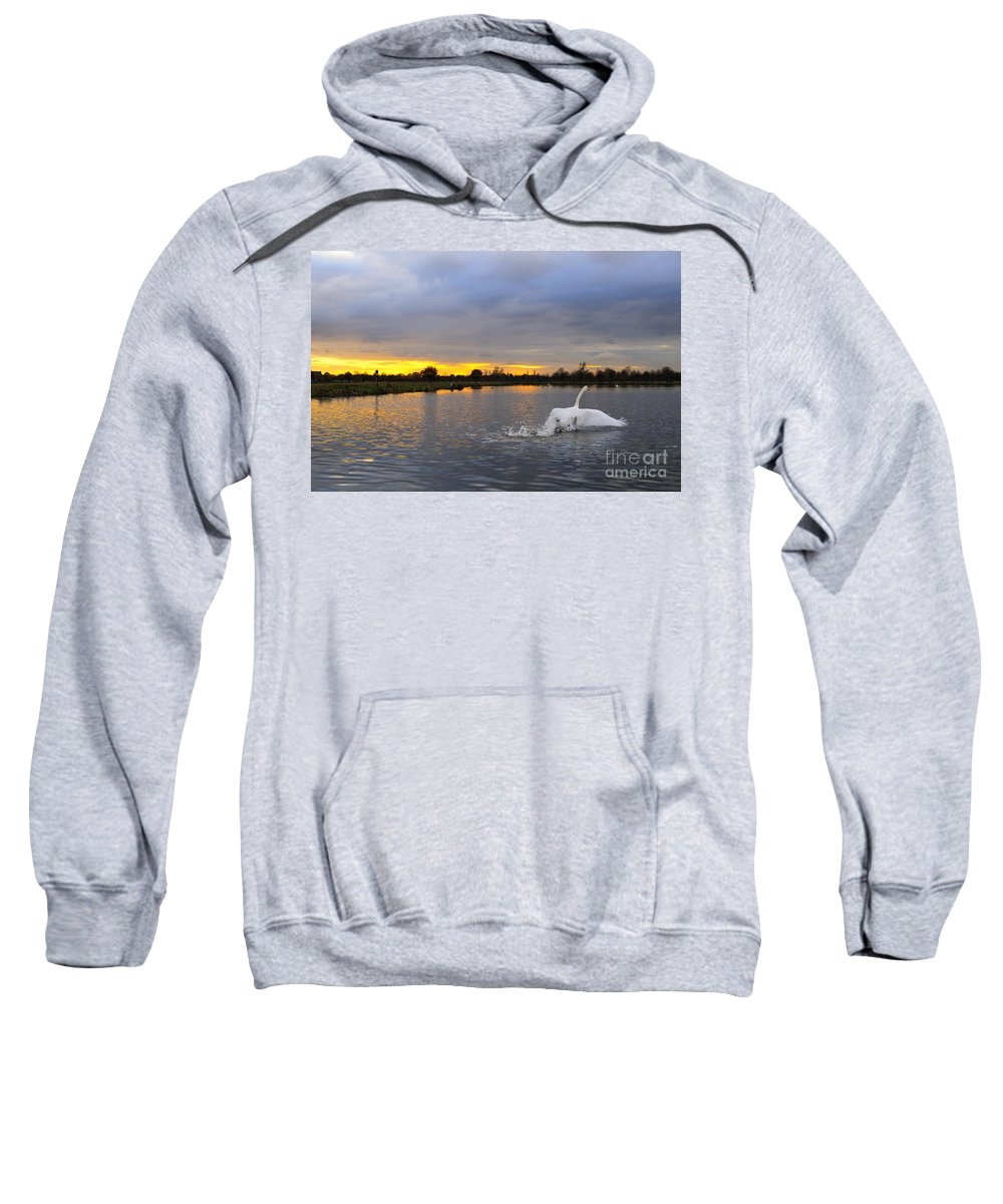 England Sweatshirt featuring the photograph Swan Taking Off by Lana Enderle