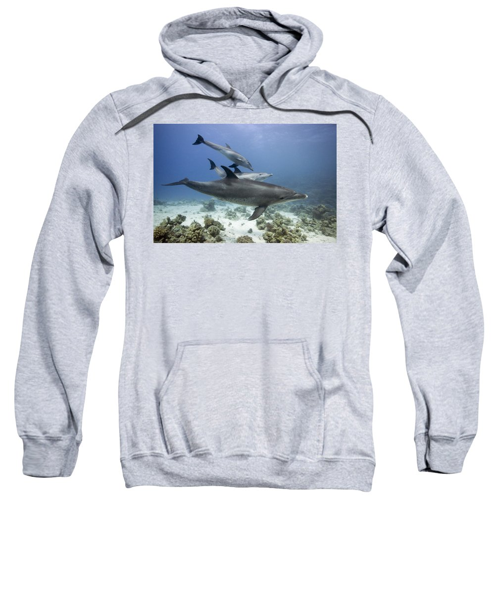 Blue Sweatshirt featuring the photograph swimming Bottlenose dolphins by Dray Van Beeck