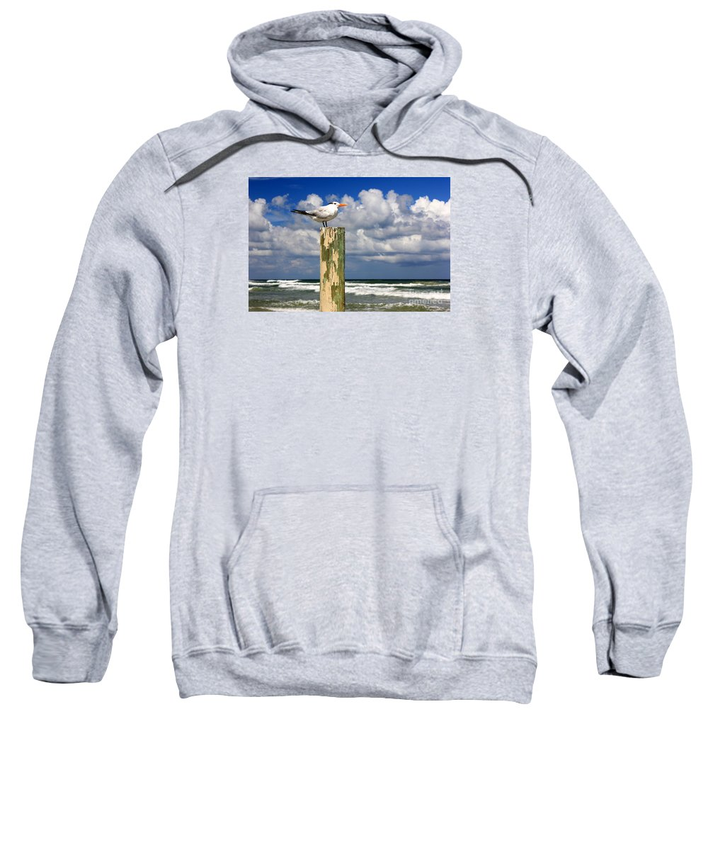 Tern Sweatshirt featuring the photograph Tern On A Piling by Sean Hughes
